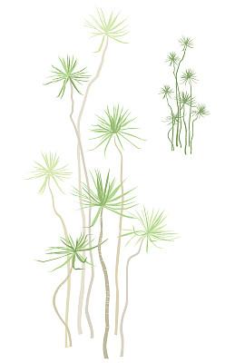 热带灌木,垂直画幅,留白,无人,绘画插图,室内植物,棕榈树,植物,彩色图片