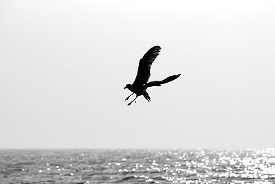 海鸥,水平画幅,秋天,无人,欧洲,鸟类,德国北海地区,高对比度,海洋,波浪