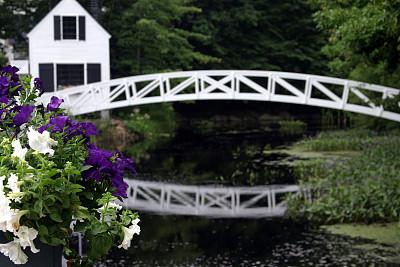 桥,矮牵牛花,水湾,水,水平画幅,睡莲,无人,户外,居住区,滨水