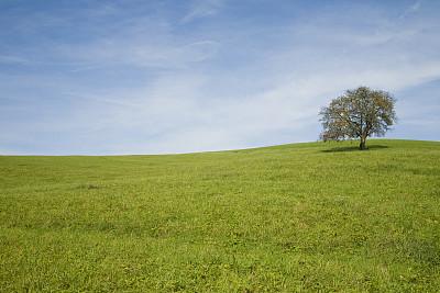 草地,一棵树,天空,复活节,水平画幅,樱花,樱桃,无人,户外,草