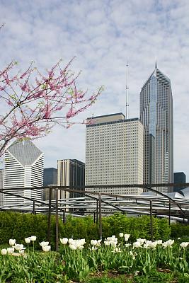 芝加哥市,城市天际线,芝加哥千禧公园,千禧年,苹果花,垂直画幅,公园,建筑,郁金香,无人