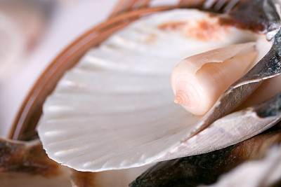 深情的,贝壳,女王凤凰螺,海螺,水平画幅,彩色图片,软体动物,米色,纪念品,柔和色