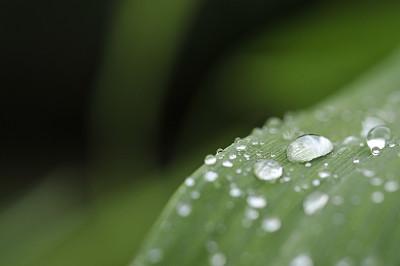 雨滴,睡莲,萱草,选择对焦,水,留白,水平画幅,绿色,无人,散焦