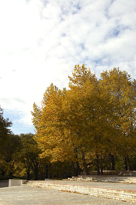 公园,小无花果树,垂直画幅,天空,休闲活动,纹理效果,枝繁叶茂,琥珀,无人,户外