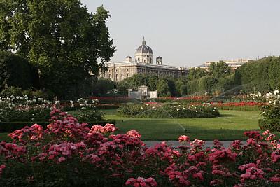 早晨,维也纳,公园,水平画幅,建筑,无人,户外,城市,仅一朵花,中欧