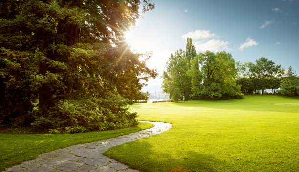 公园,绿色,自然美,黎明,全景,城市,园林,庭院,草坪