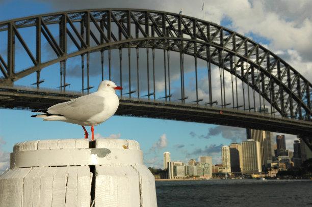 海鸥,悉尼,悉尼港桥,水,新南威尔士,水平画幅,码头,无人,海港,等