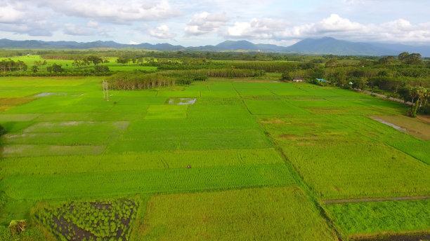 田地,自然,稻,绿色,地形,全景,水平画幅,高视角,林区,无人
