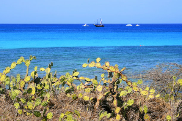 Idyllic Arashi tropical turquoise Beach with ship and green cactus plants, Aruba – sunny blue lagoon, summer paradise, Dutch Antilles, Caribbean Blue sea