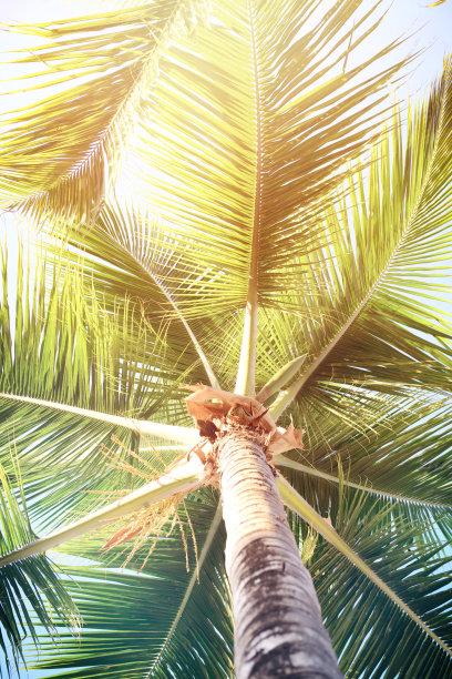 椰子树,垂直画幅,天空,度假胜地,无人,热带雨林,夏天,户外,棕榈树,雨林