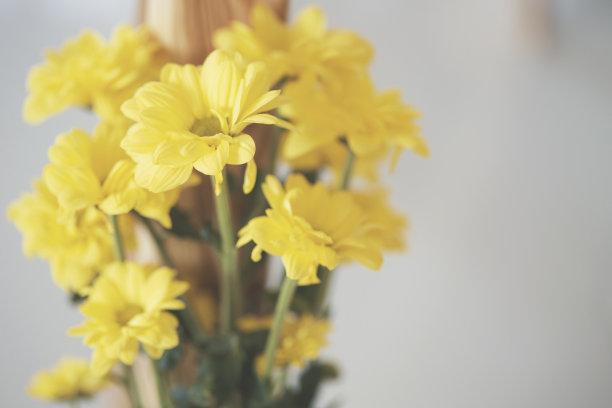 花束,春天,黄色,灵感,水平画幅,无人,夏天,户外,活力,想法