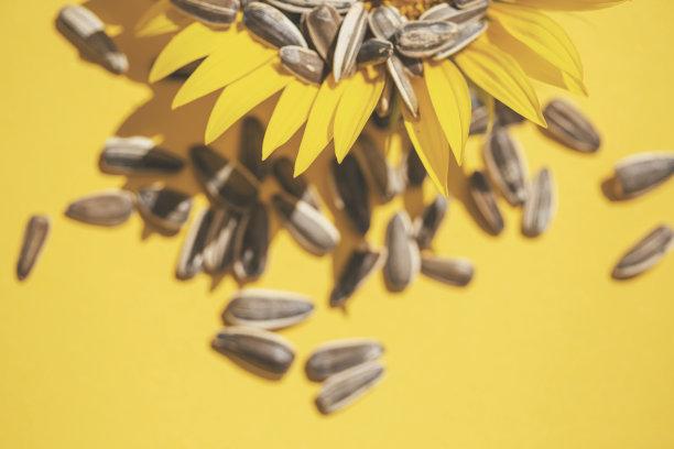 背景分离,种子,向日葵,褐色,波普风,水平画幅,无人,生食,夏天,组物体