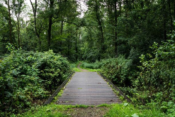 自行车道,小路,森林,豪达,枝繁叶茂,桥,绿色,成一排,水平画幅,无人