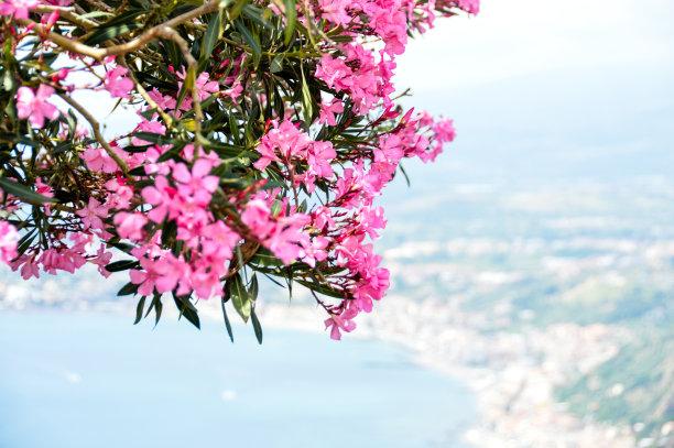 西西里,视角,陶尔米纳,明信片,自然美,在上面,水,旅行者,夏天,都市风景