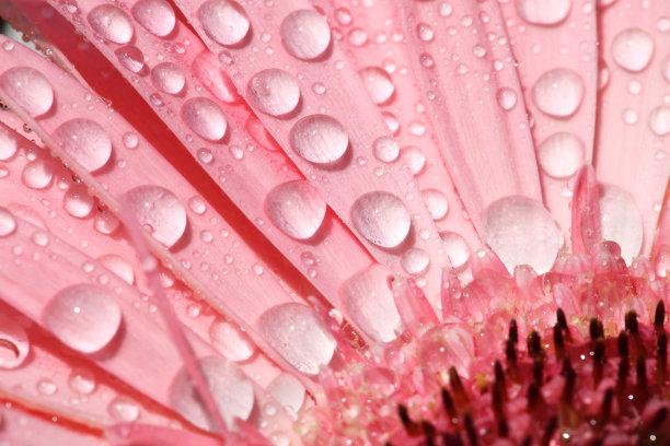 仅一朵花,红色,水,美,水平画幅,无人,紫苑,夏天,特写,俄罗斯