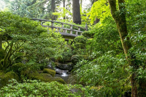 星和园,瀑布,人行桥,波特兰,枝繁叶茂,树林,色彩饱和,美国西北太平洋地区,俄勒冈州,俄勒冈郡