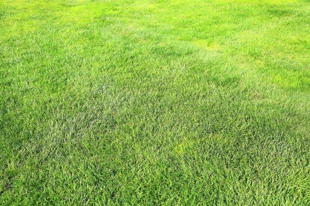 草,绿色,背景,纹理效果,草坪,夏天,刀刃草,运动,彩色图片,运动场
