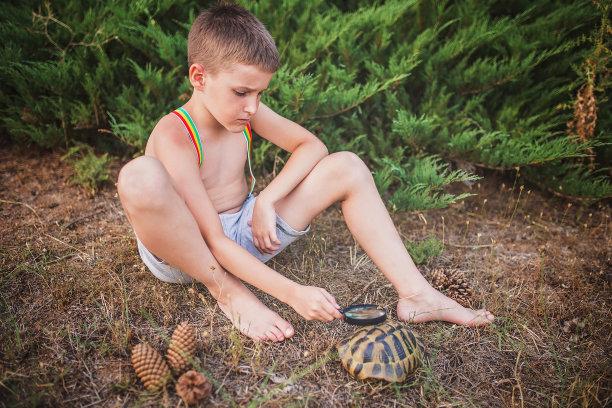 自然,恐怖,動物嘴,草,色彩鮮艷,海龜,動物,動物習性,兒童,園林