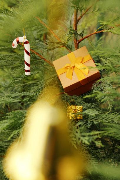 松树,包装纸,垂直画幅,留白,新的,无人,符号,古典式,圣诞树