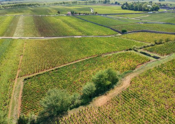葡萄园,法国,勃艮第,葡萄酒厂,水平画幅,高视角,无人,夏天,户外,草
