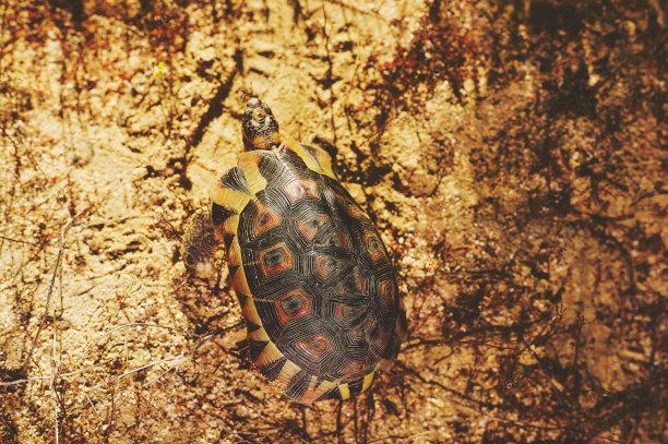 角龟,顶部,风景,水平画幅,高视角,无人,泥土,动物身体部位,野外动物,户外