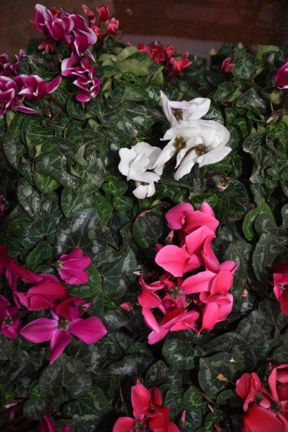 水仙花,垂直画幅,留白,艺术,无人,生日,摇滚乐,明亮,花束,白色