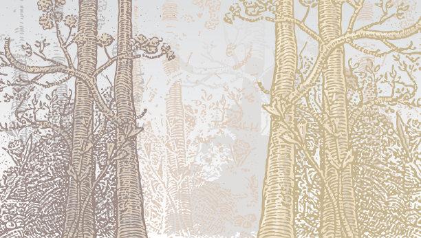 森林,魔法,春天,水平画幅,彩色图片,秋天,无人,绘画插图,木版画,枝