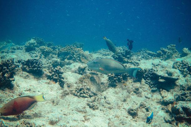 水下,马尔代夫,水,美,水平画幅,水肺潜水,形状,沙子,两只动物,夏天