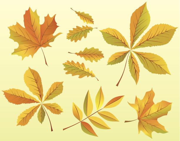 秋天,叶子,两只动物,垂直画幅,天气,彩色图片,无人,黄色,栗树,绘画插图