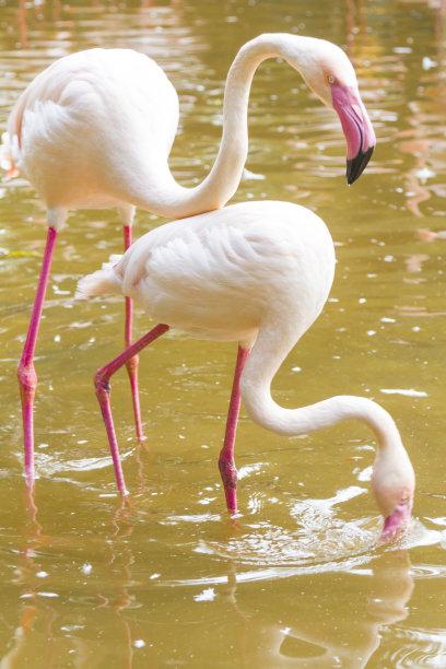 Foz do Igua?u, Tropical Birds