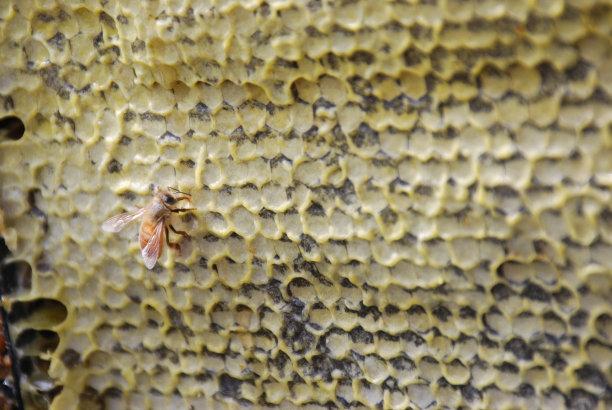 六边形,蜂蜜,休闲活动,水平画幅,工作场所,无人,生食,蜂蜡,健康,夏天