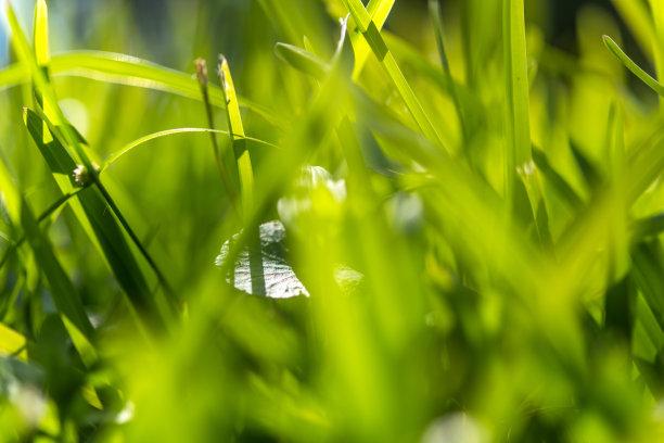 清新,绿色,枝繁叶茂,早晨,纯净,草坪,夏天,光,草,明亮