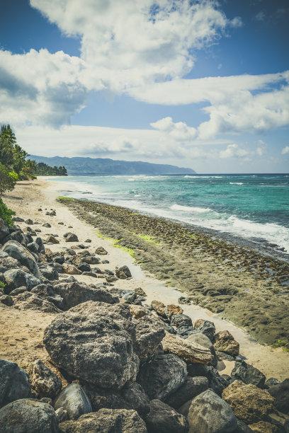 海龜沙灘,瓦胡島,夏威夷,垂直畫幅,正面視角,水,沙子,無人,野外動物,戶外