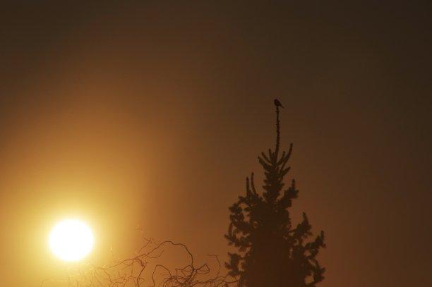 早晨,北美歌雀,天空,水平画幅,无人,鸟类,动物习性,夏天,户外,反差