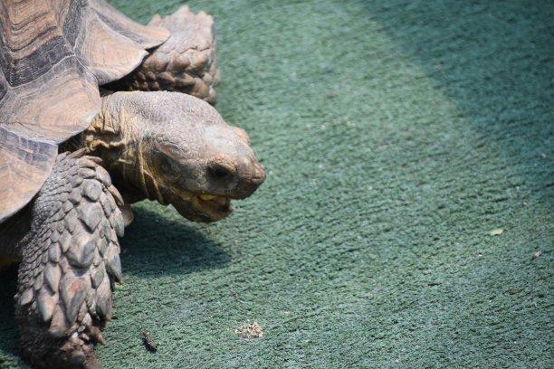 龜,自然,海龜,野生動物,水平畫幅,無人,動物身體部位,背景分離,一只動物,龜殼