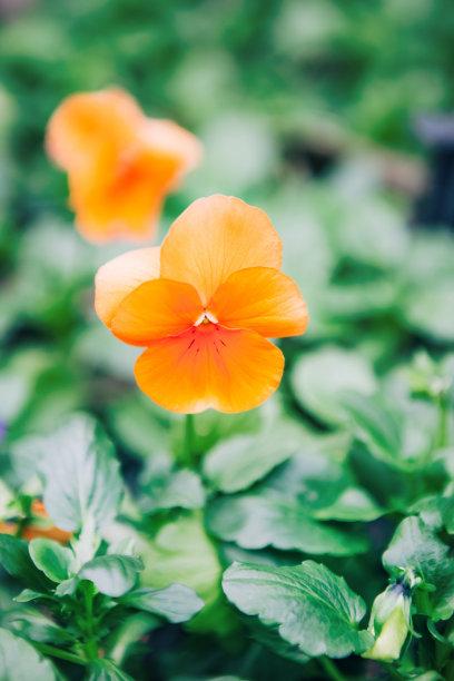 特写,野花,垂直画幅,合成图像,art deco风格,边框,纹理效果,无人,户外,仅一朵花