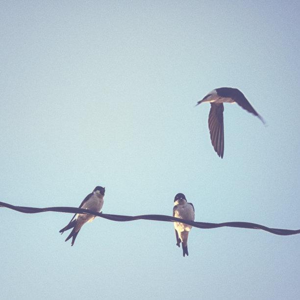 电缆,天空,燕子,白腹毛脚燕,蓝色,黄昏,美,无人,鸟类,参观者