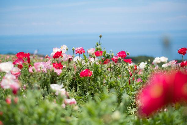 日本,储蓄,淡路岛,旅途,新的,夏天,光,白色,果园,植物学