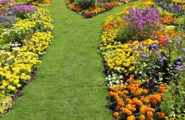园林,温带的花,留白,公园,水平画幅,无人,紫苑,草坪,夏天,户外