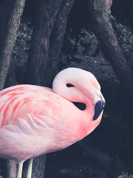 火烈鸟,垂直画幅,野生动物,美国,无人,鸟类,户外,一只动物,喙,彩色图片