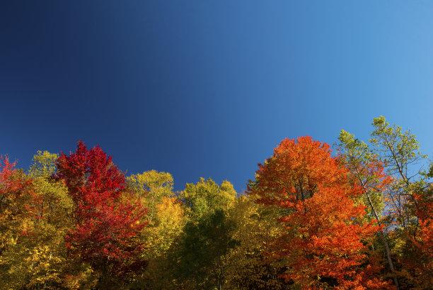 美国,新英格兰,夏天,天空,水平画幅,枝繁叶茂,无人,户外,树林,刺针樱桃树木