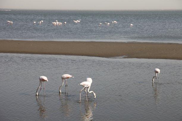 沃尔维斯湾,火烈鸟,纳米比亚,自然,水,水平画幅,地形,无人,原野,非洲