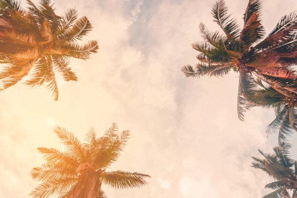 椰子树,夏天,海滩,概念,天空,水平画幅,云,沙子,户外,棕榈树
