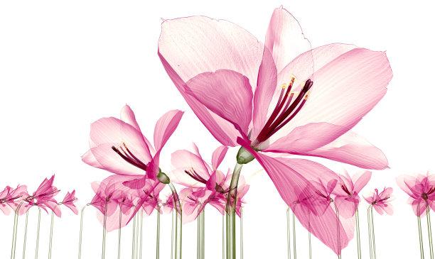 x光片,三维图形,绘画插图,白色,分离着色,自然,美,x光,水平画幅,蓝图