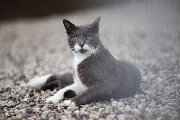 户外,猫,灰发,正面视角,美,水平画幅,银色,椅子,动物身体部位,特写