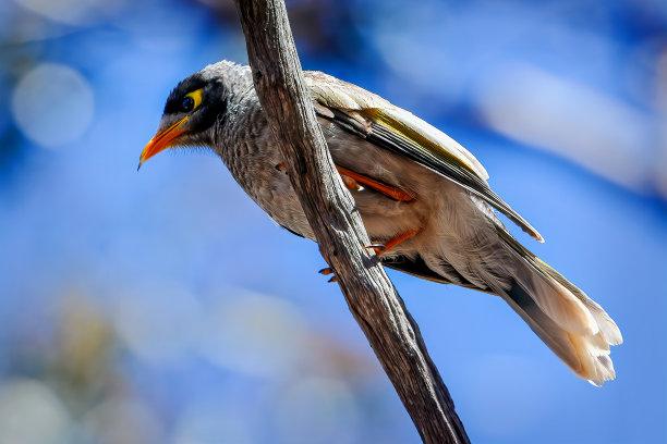 噪声鸟类图片