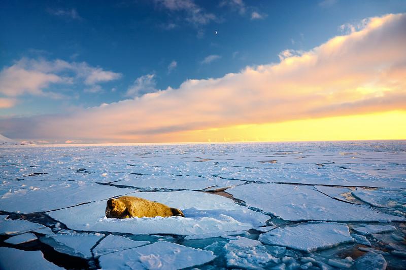 北极点,斯瓦尔巴德群岛,冰川,斯瓦尔巴特群岛和扬马延岛,自然,天空,寒冷,水平画幅,地形,蓝色