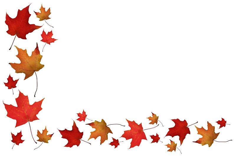 边框,自然,秋天,褐色,水平画幅,无人,特写,明亮,白色,植物