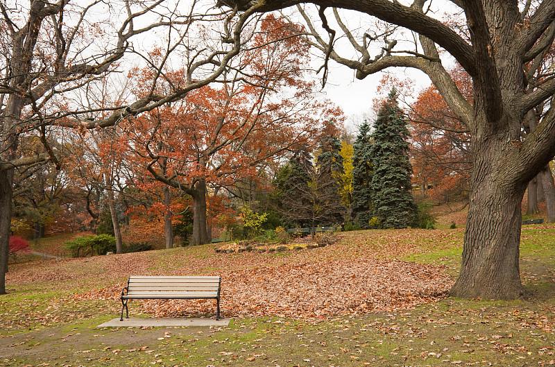 公园长椅,公园,长椅,座位,水平画幅,无人,户外,家具,秃树,树林