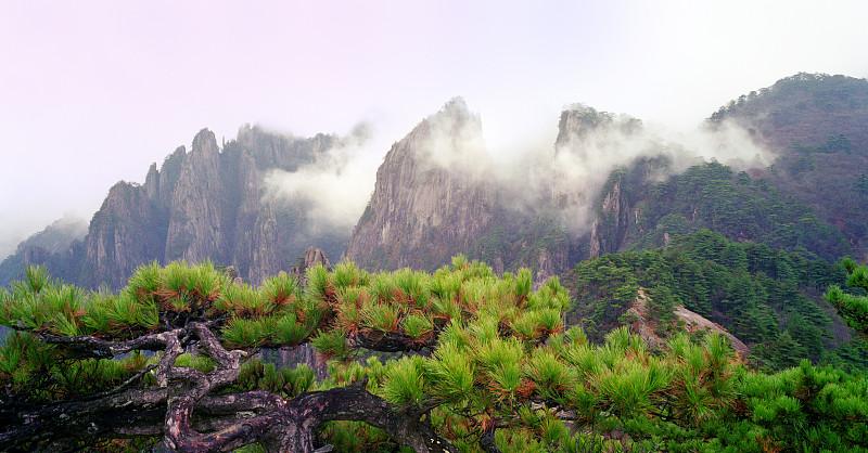 中国,安徽省,自然,松树,水平画幅,地形,山,无人,早晨,户外